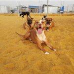 מדריך לבחירת פנסיון לכלבים בדרום